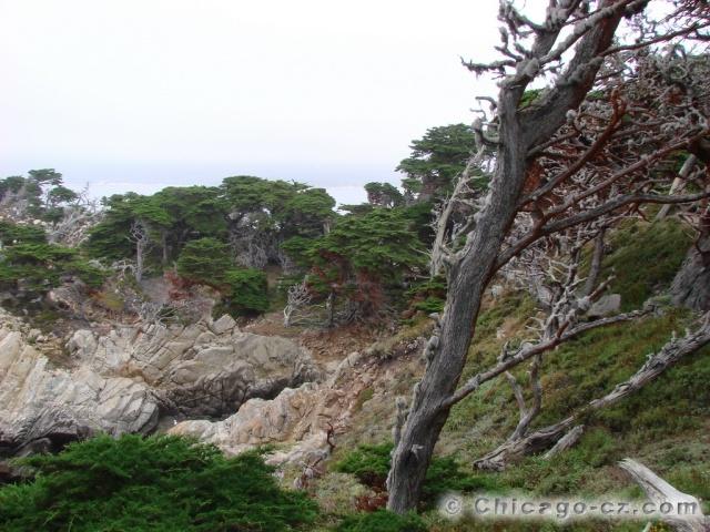 Point Lobos S.P.10