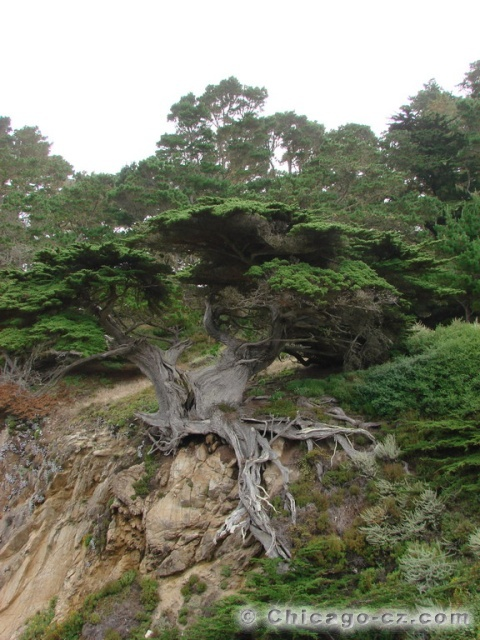 Point Lobos S.P.11