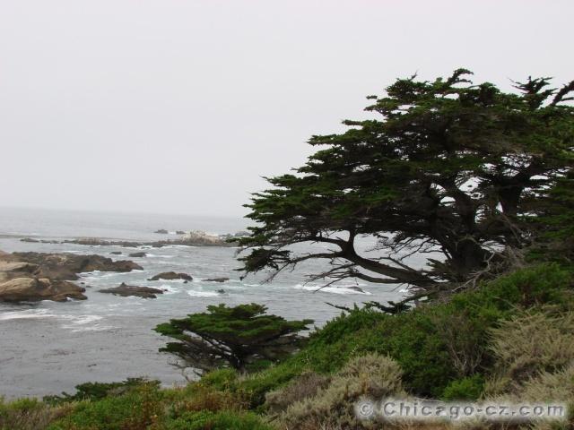 Point Lobos S.P.6