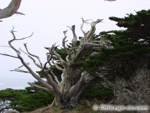 Point Lobos S.P.7