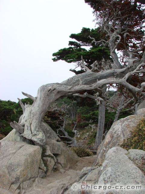 Point Lobos S.P.8