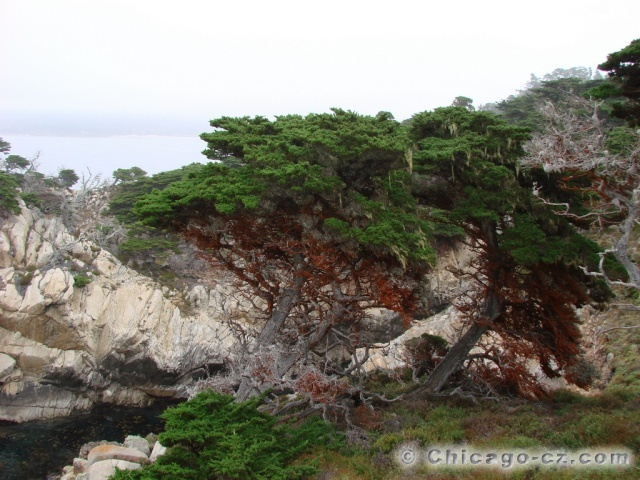 Point Lobos S.P.9