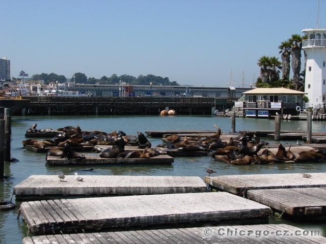 San Francisco Pier 39 lvouni
