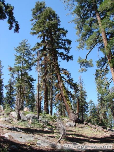 Yosemite Valley N.P. Stezka k Taft Point1